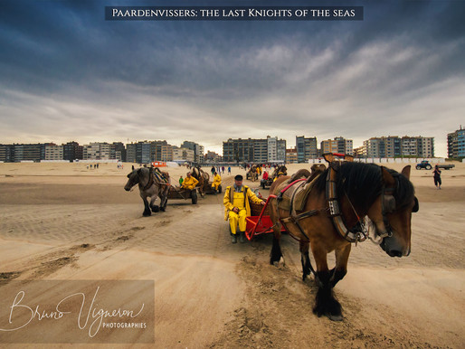 Paardenvissers: the last Knights of the seas