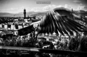 Take-off. Firenze - Italy