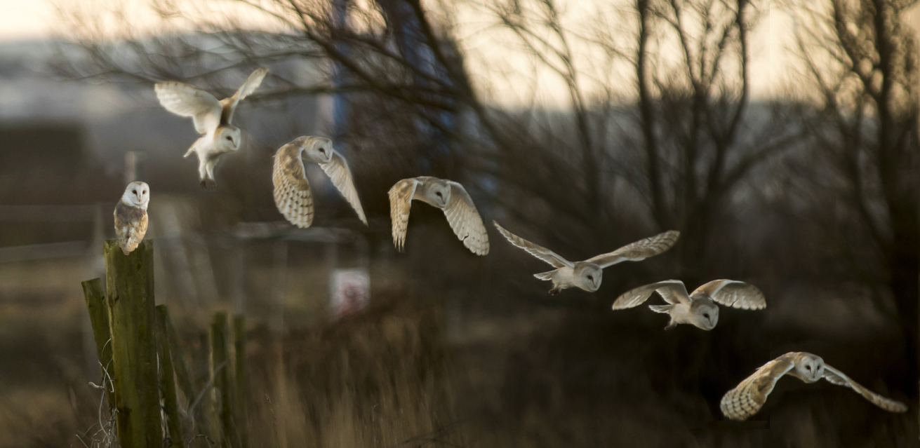 © Martyn Fletcher www.flickr.com