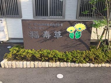 福寿草外観1