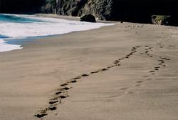 Navarro Beach, California, U.S.