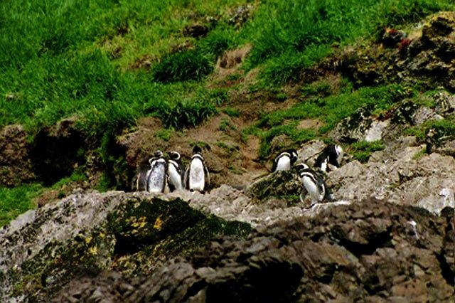 Chiloé Island, Chile