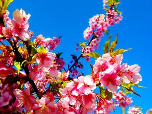 北鎌倉は春爛漫♪