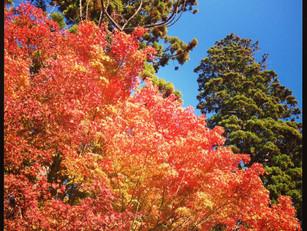 北鎌倉の紅葉がはじまりました♪