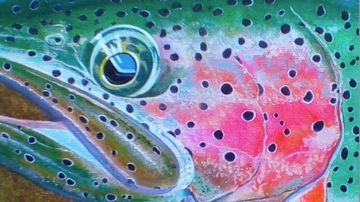 Wild Rainbow #1