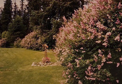 Lilac Gardens