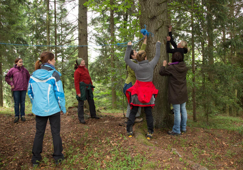 Teamwork am Baum