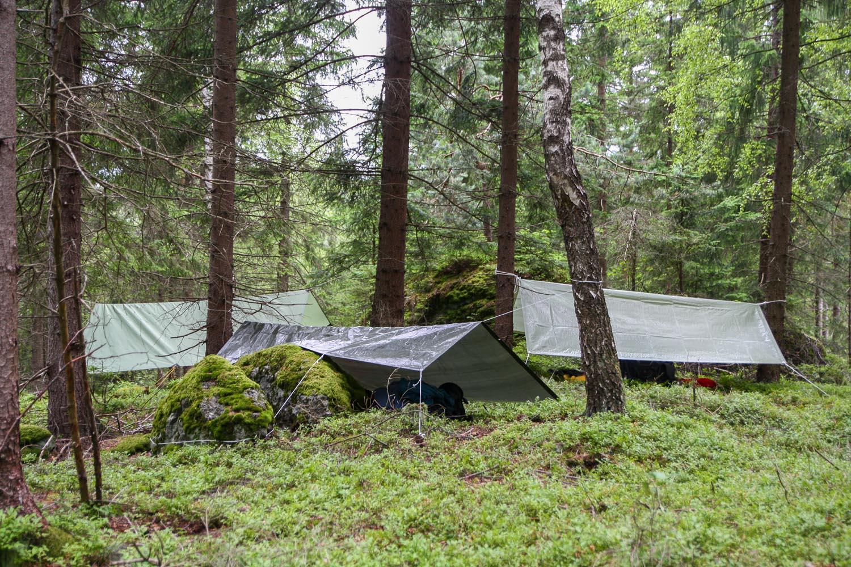 zu Gast im Wald