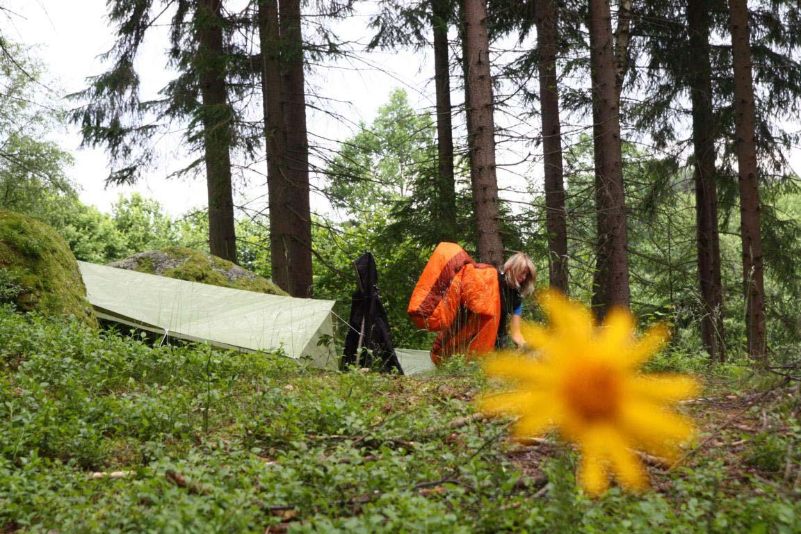 Schafplatz im Wald