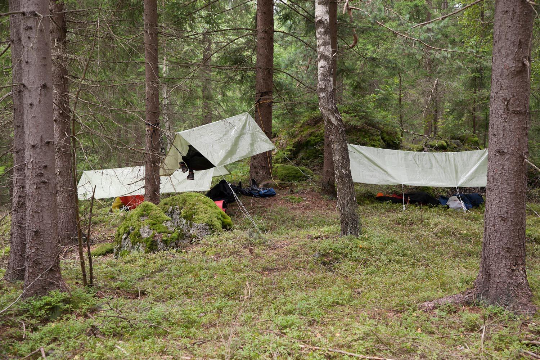 im Wald zu Hause sein