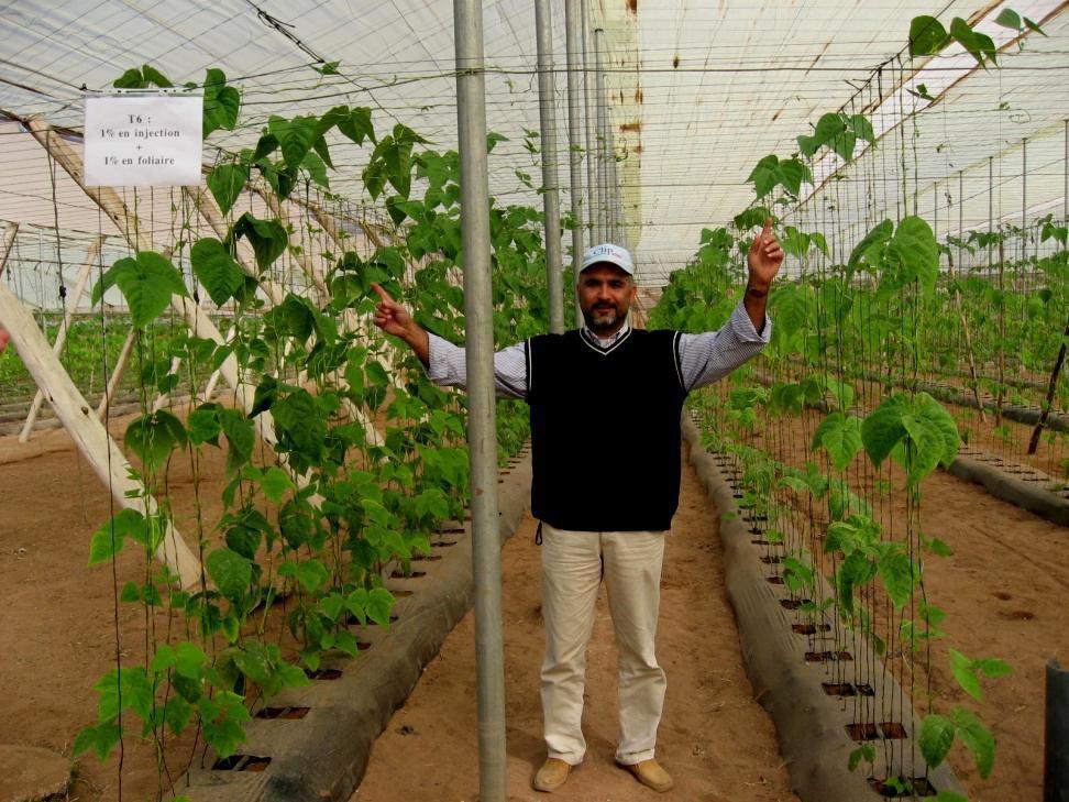 Dr. Abdelhaq Hanafi - University of Morocco