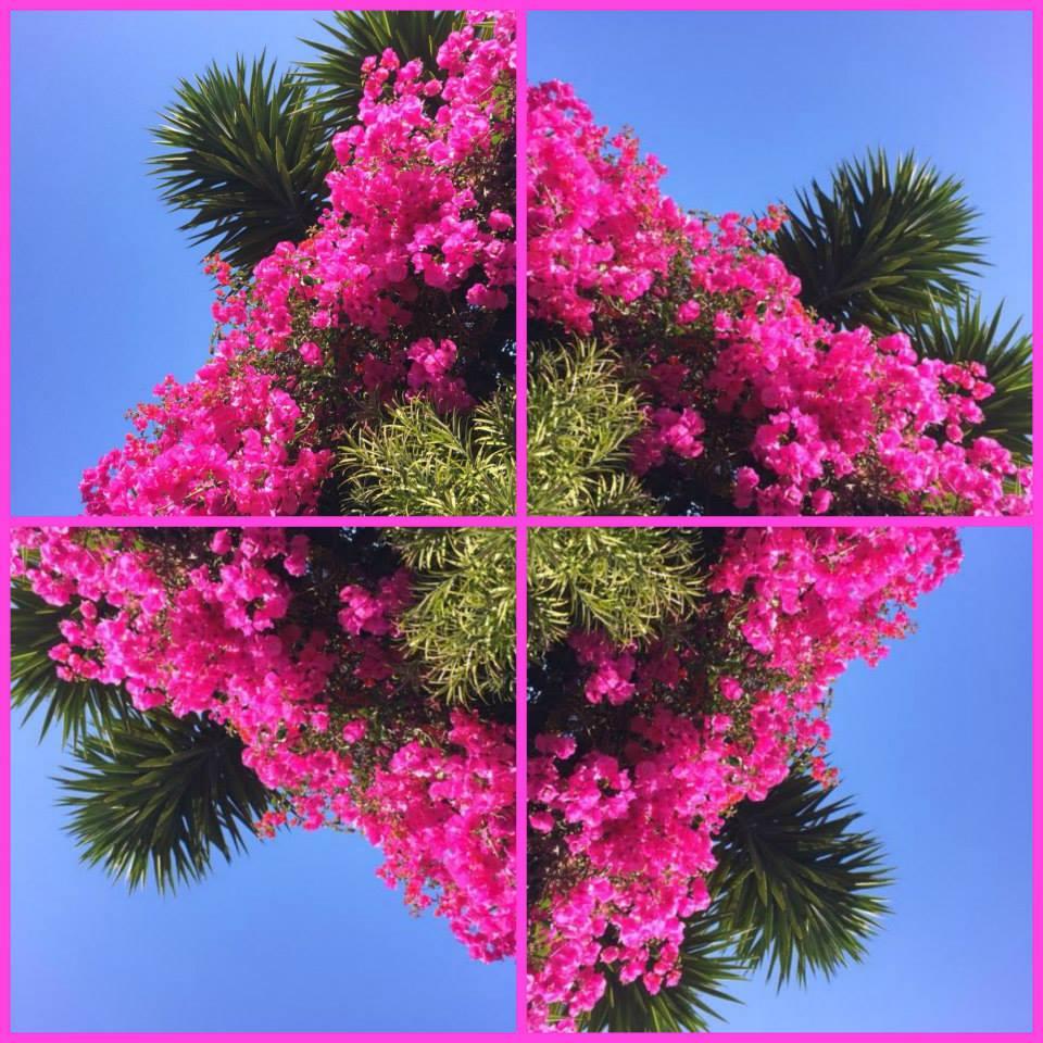 Floradante