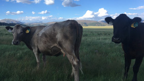 Valles Caldera Seeks Applications for 2020 Livestock Program
