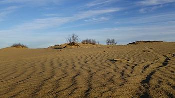 Douglas Provincial Park Dunes