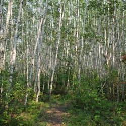 Boreal Trail Meadow Lake, SK
