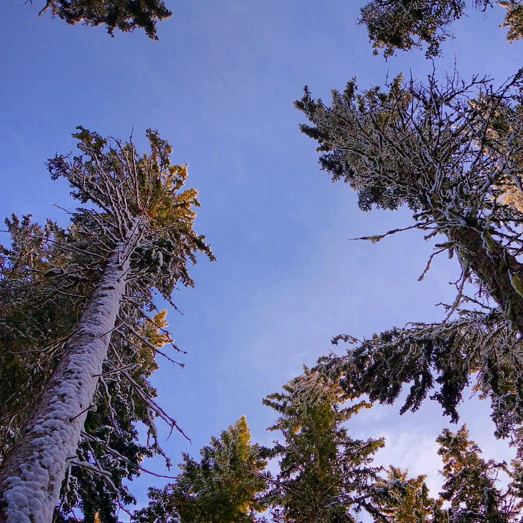 Saskatchewan Boreal Forest