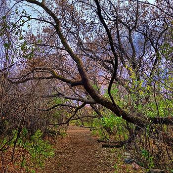 Saskatoon Hiking Trails