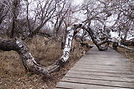 Crooked Bush Hafford Saskatchewan