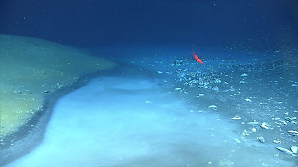 Brine river on the deep-sea floor. A chemosynthetic mussel bed is at right.