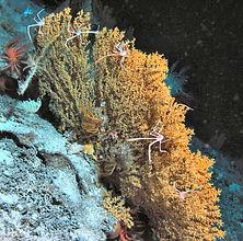 Biolum2009-JSL2-3697-014sm.jpg