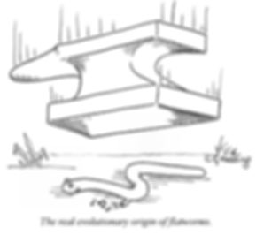 Anvil falling on worm = origin of flatworms