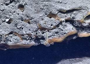 Methane bubbles seeping from an orange methane hydrate deposit.