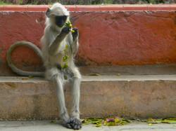 Monkey Business, India 2010
