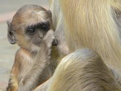 Baby, India 2010