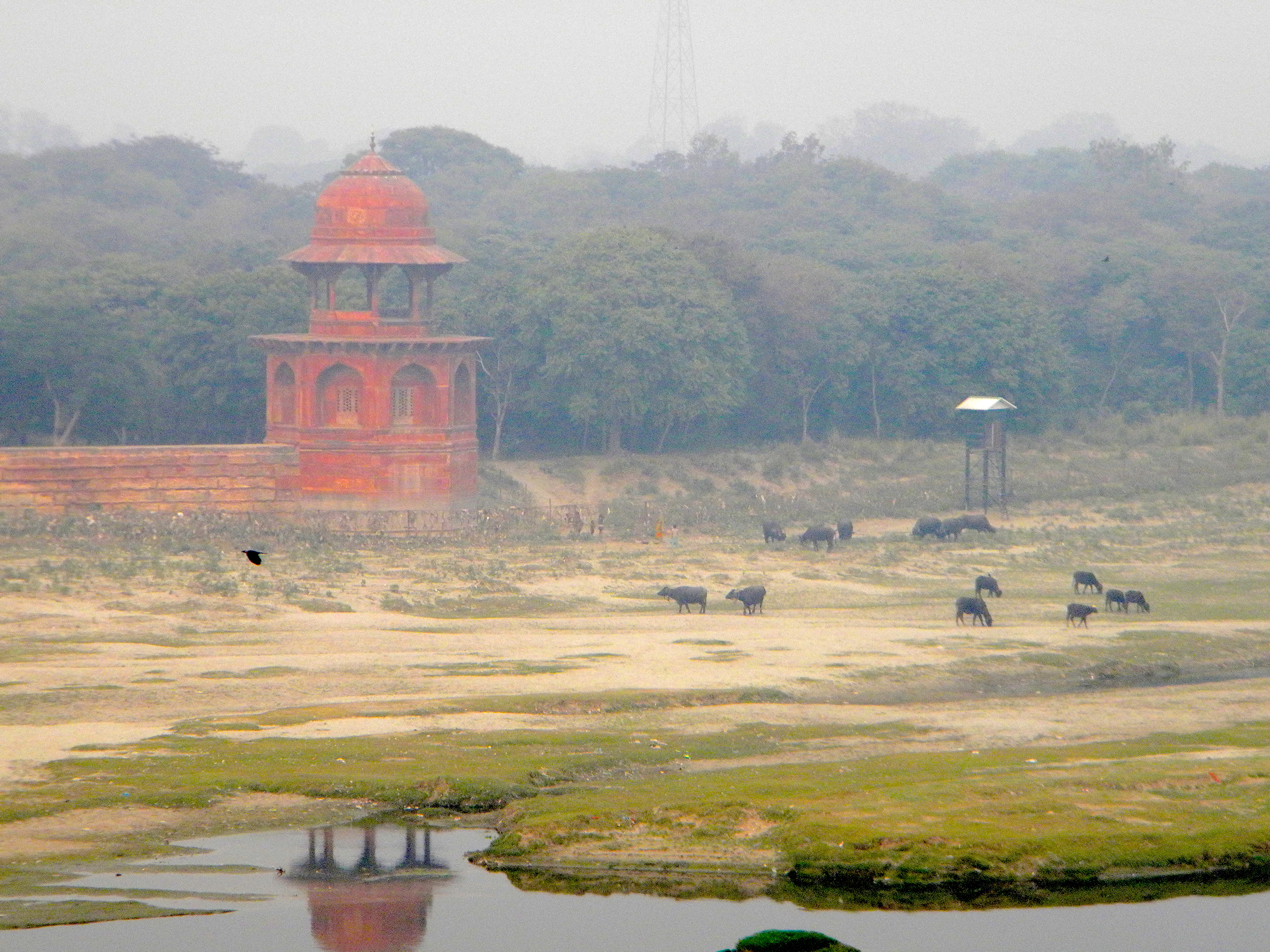 Mirror, India 2010