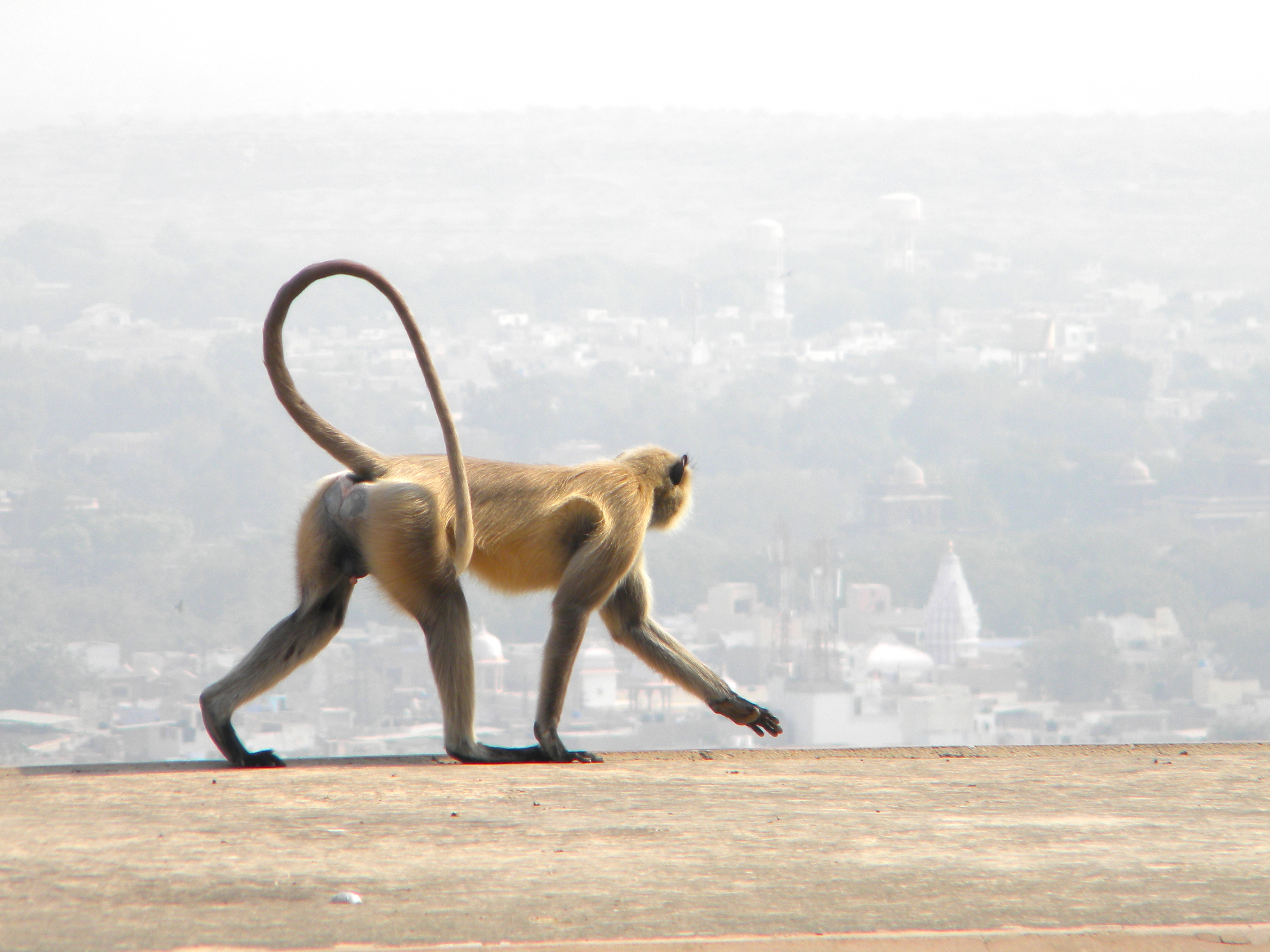 On Top of the World, India 2010