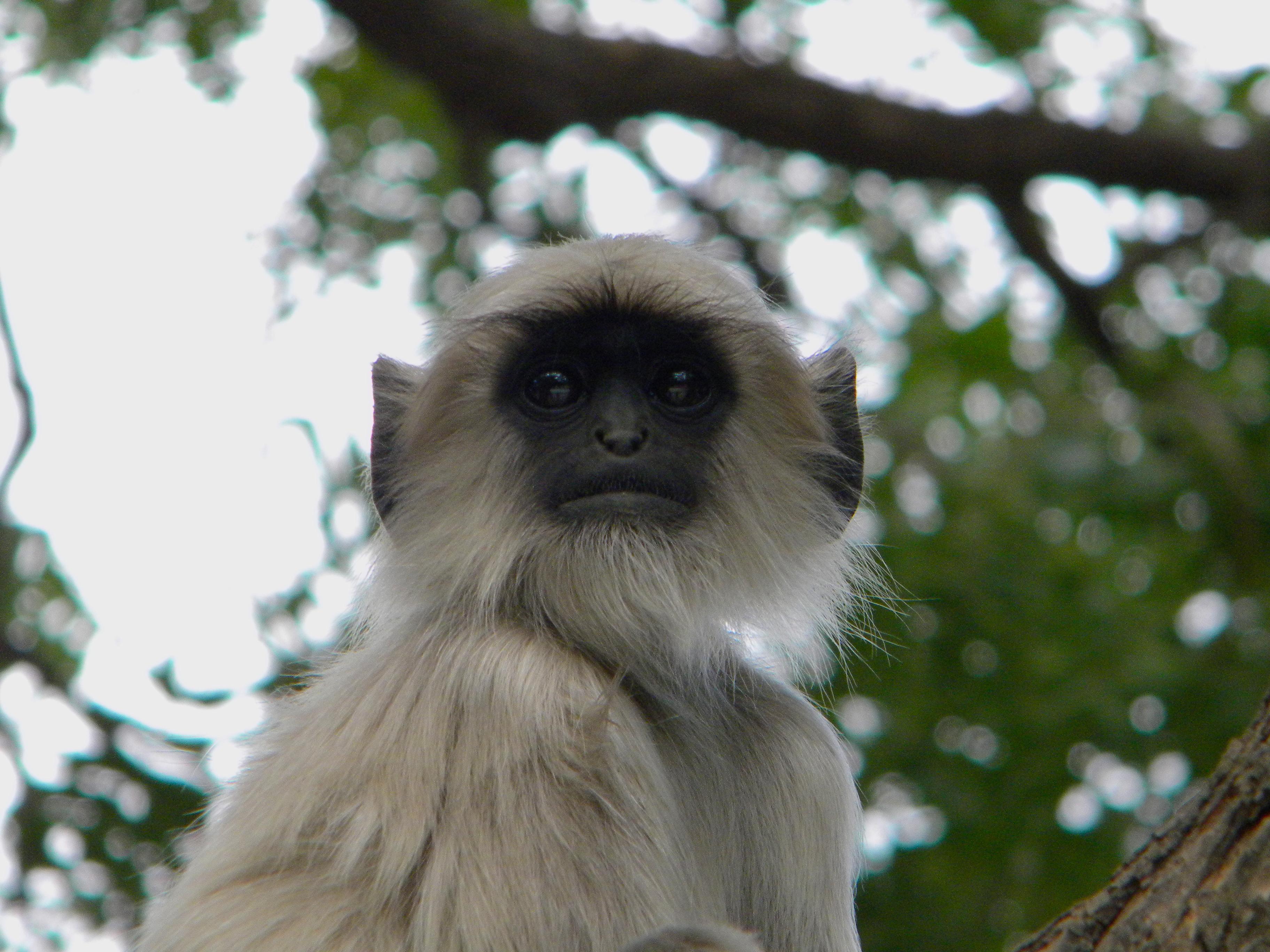 Caught, India 2010