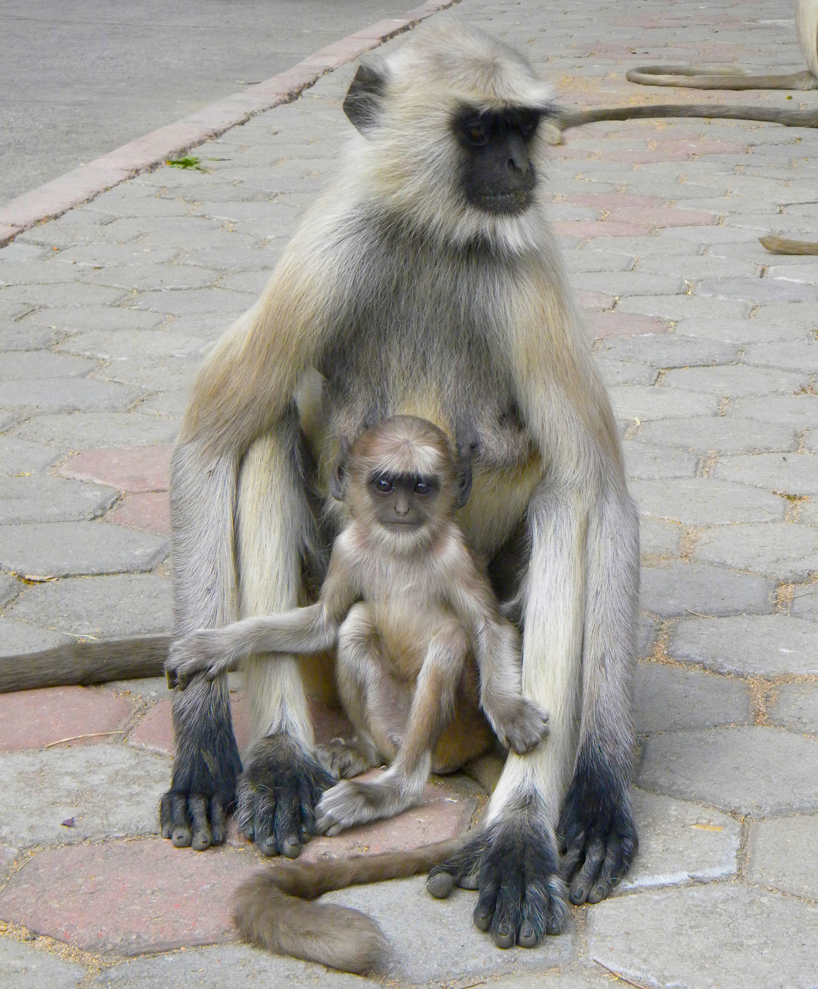 Mother and Child, India 2010