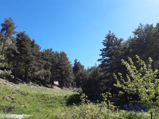 Bonita parcela 3897m2 a unos pasos del lago de Engolaster 867 000 €