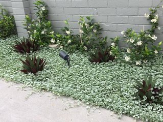 Ground cover plants to use