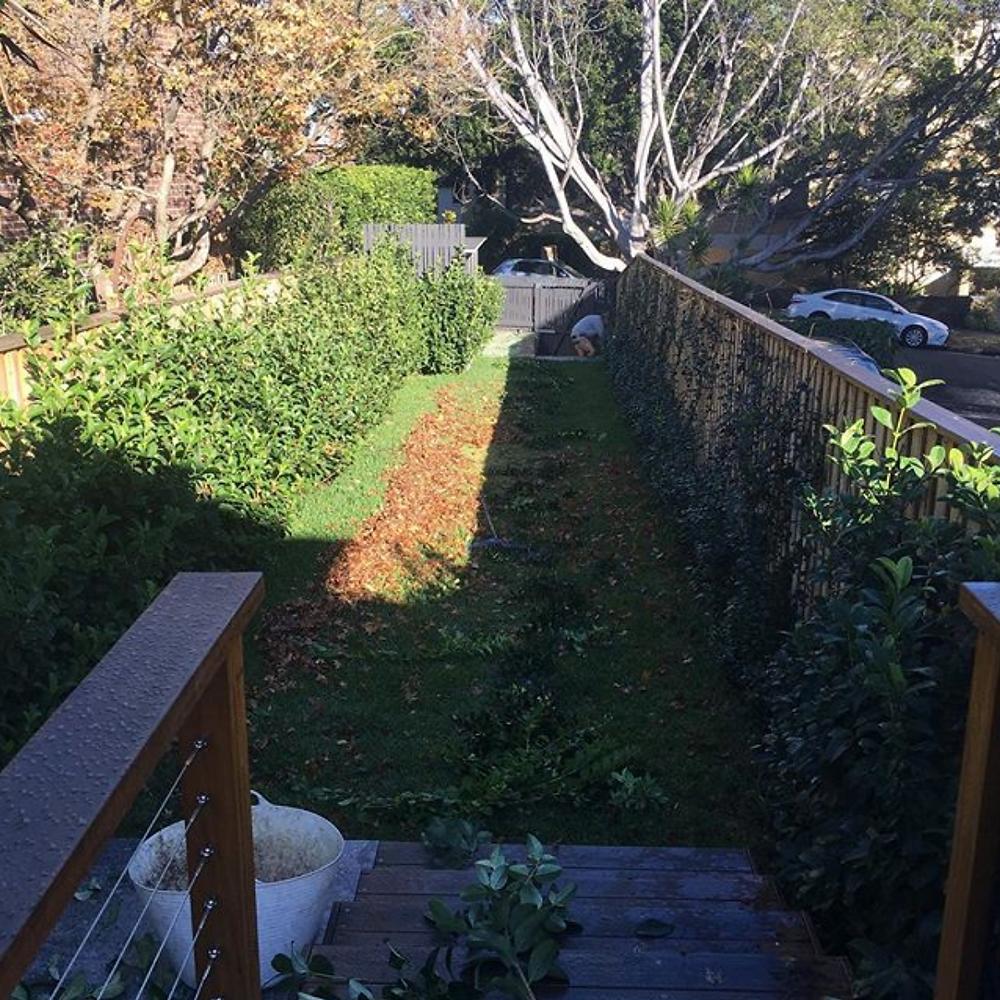 Garden Maintenance Northern Beaches & North Shore