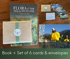 V2 CRG Cards & Book.png