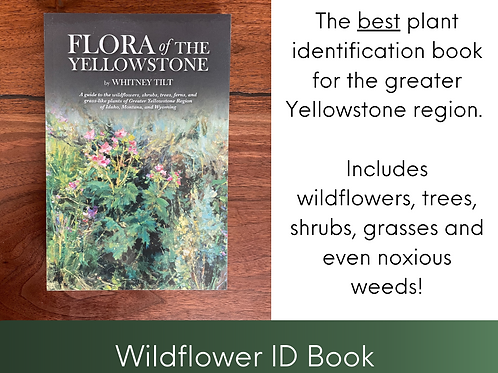 Flora of the Yellowstone
