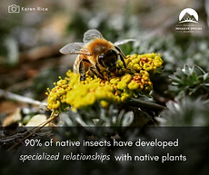 Insects and native plants.png