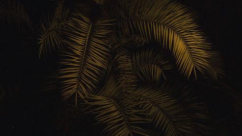 Árvore na noite