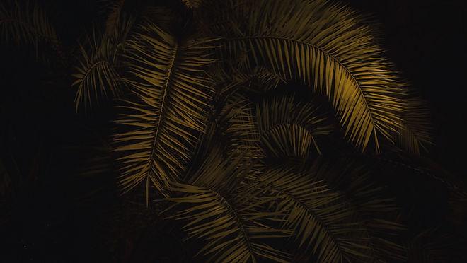 Tree at Night