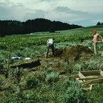 TBT, Excavations at the Wolf Springs sit