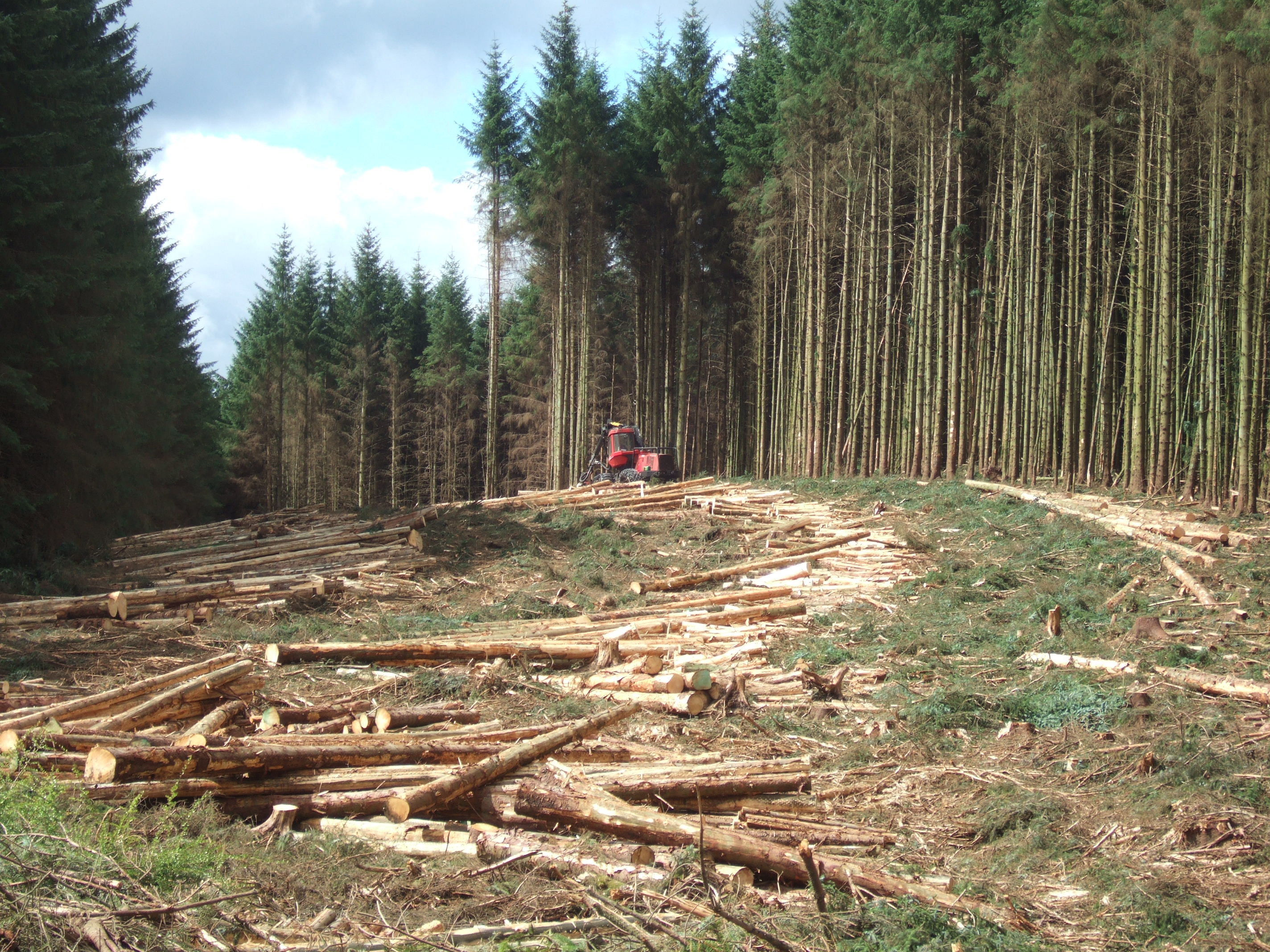 Timber - Cleared Land