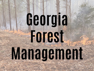 Georgia Forest Management