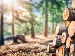 SLA Timber Market Update