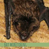 Bat Monitoring
