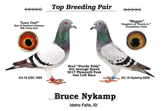 Top Breeding Pair Steady Eddy.jpg