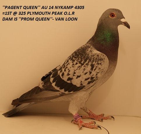Pagent Queen.jpg