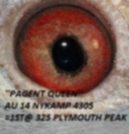 Pagent Queen Eyeshot.jpg