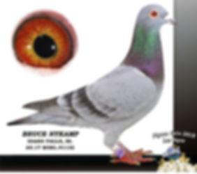 Pigeon Gala 2018 1.jpg