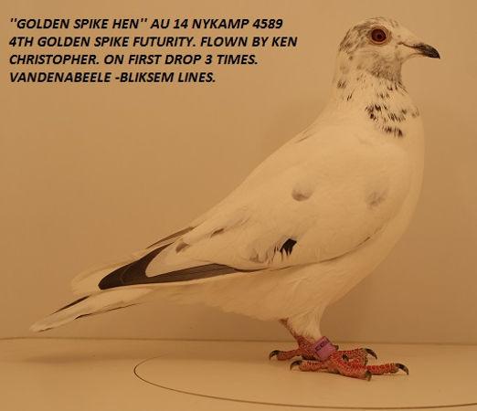 Golden Spike Hen.jpg